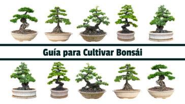 Guía para Cultivar Bonsái - Guias PDF