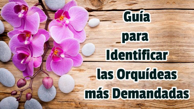 Guía para Identificar las Orquídeas más Demandadas - Guias PDF