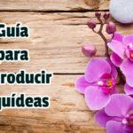 Guía para Reproducir Orquídeas - Guias PDF