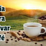 Guía para Cultivar Café - Guias PDF