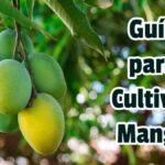 Guía para Cultivar Mango - GuiasPDF