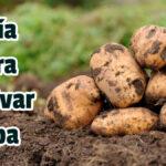 Guía para Cultivar Papa - Guias PDF