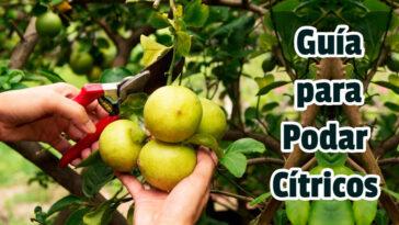 Guía para Podar Cítricos - Guias PDF