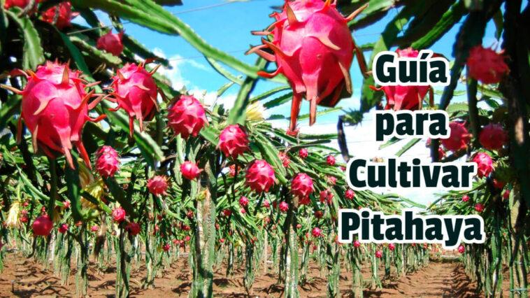 Guía para Cultivar Pitahaya - Guias PDF