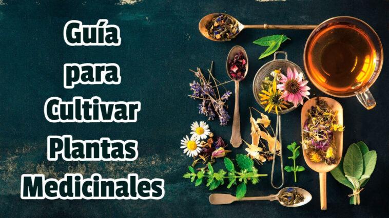 Guía para Cultivar Plantas Medicinales - Guias PDF