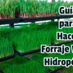 Guía para Hacer Forraje Verde Hidropónico - Guias PDF