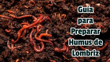 Guía para Preparar Humus de Lombriz - Guias PDF