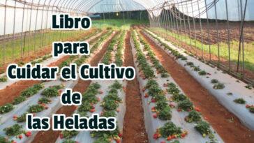Libro para Cuidar el Cultivo de las Heladas - Guias PDF