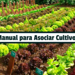Manual para Asociar Cultivos - Guias PDF