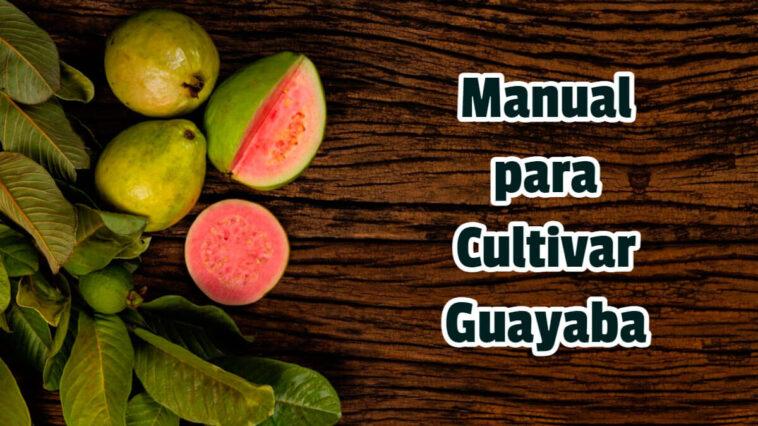 Manual para Cultivar Guayaba - Guias PDF