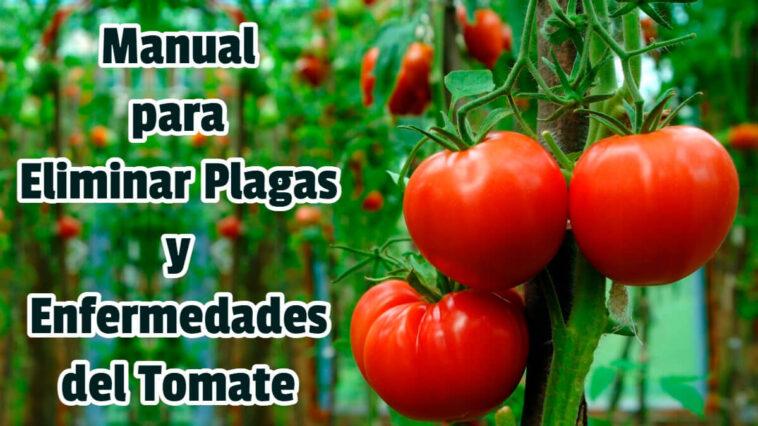 Manual para Eliminar Plagas y Enfermedades del Tomate - Guias PDF