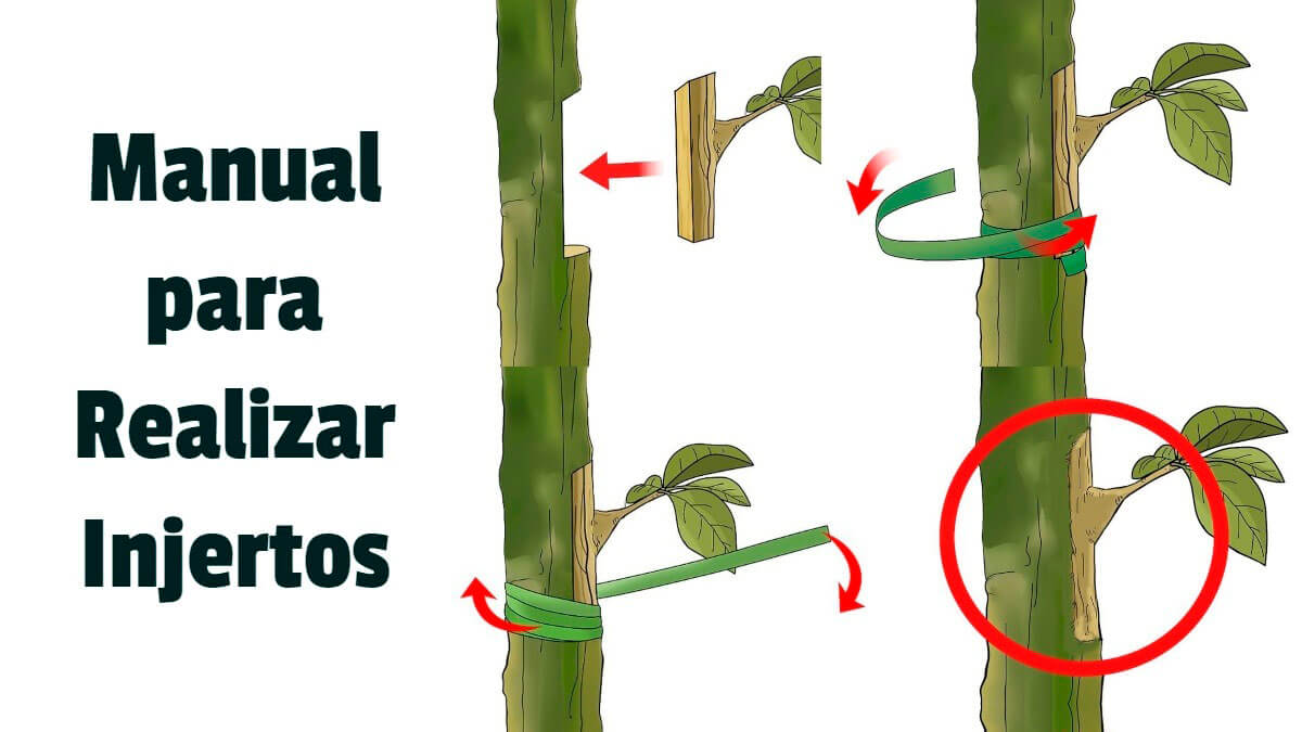 Manual para Realizar Injertos - Guias PDF